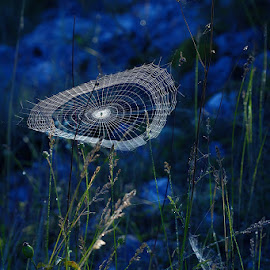 Rhapsody in blue by Rucsandra Calin - Nature Up Close Webs ( webs, nature close up )