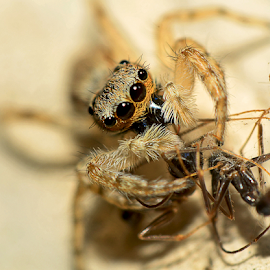 by Eko Janu - Animals Insects & Spiders