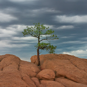 Lonely Sentinel by Lynn Wiezycki - Landscapes Mountains & Hills ( sky, mountain, edge, red, tree, pine tree, cliff, sandstone, rock, landscape, alone )