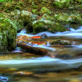 After The Rain by Siniša Biljan - Nature Up Close Water