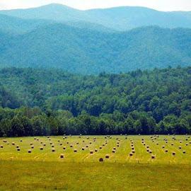 Meadowscape by Sunni Davis - Landscapes Prairies, Meadows & Fields
