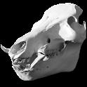 Boar Score icon