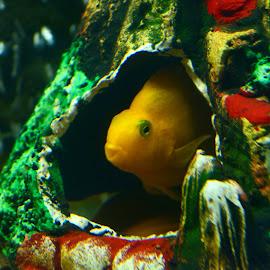 Baby by Satyajit Sinha - Animals Fish