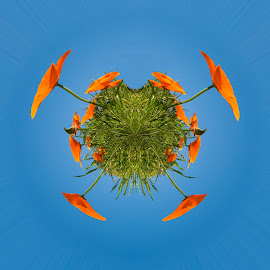 my world by Vibeke Friis - Digital Art Things ( orange, californians poppies, flowers )
