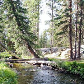 Rivers Edge by Darla Judes - Novices Only Landscapes ( pines, mountains, trees, log, river )