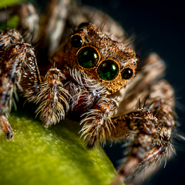 by Dave Lerio - Animals Insects & Spiders (  )