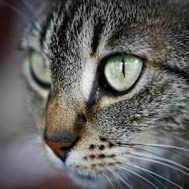 by Mark  Gregg - Animals - Cats Portraits