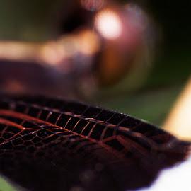 Dragon Fly in Macro by Glinson Aj - Abstract Macro