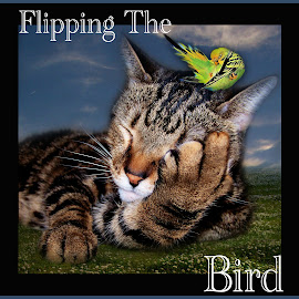 Flipping The Bird by Elizabeth Burton - Typography Quotes & Sentences ( cat, pun, grass, framed, funny, flipping, humorous, play on words, bird, silly, sky, digital art, humor, typography, flipping the bird )