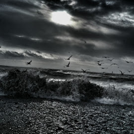 gulls and steel ocean breaks by Noel Roche - Digital Art Places ( monochrome, seaporn, sea, wildlife, ocean, good, seascape, beach, birds, photography )