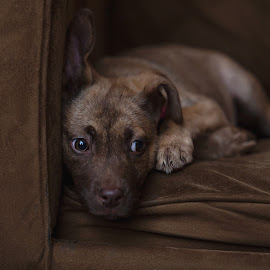 Little Luna by Mark Bailey II - Animals - Dogs Puppies
