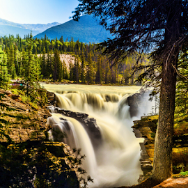 Athabasca Fall by Joseph Law - Landscapes Waterscapes ( national park, bushes, rocky mountains, trees, athabasca fall, rocks, banff )