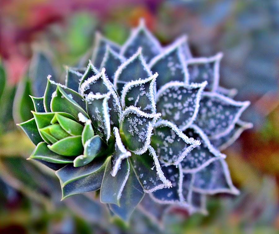 Smrznuti by Jelena Puškarić - Nature Up Close Other Natural Objects (  )