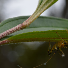 up side down by Casterino Rio - Novices Only Macro ( plant, macro, green, insect, garden )