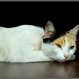green eyes hypnoties by Swapneel Saldur - Animals - Cats Portraits (  )