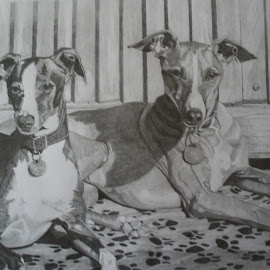 Friends 2 by Marilyn Brown - Drawing All Drawing ( two, sitting, dogs, on, together )
