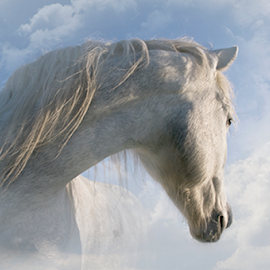 Surreal Horse by Alison Kekewich Duncan - Digital Art Animals ( equine, camargue horse, horse from different angle, horse in clouds, white horse )