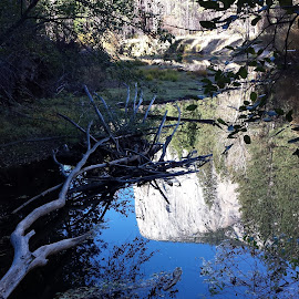 Yosemite Reflection by Cheryl Petretti - Nature Up Close Water (  )