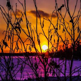 Backdrop by Jackie Hartleben - Nature Up Close Trees & Bushes ( macro, winter, nature, bushes, sunset, trees, landscape )