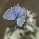 Unknown blue