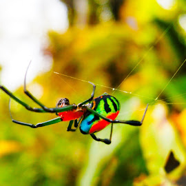 Rainbow  Spider_beautiful beastly creature  by Sharon Tomutagweda - Nature Up Close Webs