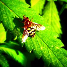Lil friend on medical grade by Joe Thola - Nature Up Close Hives & Nests ( #gopro #libertylakewa #mmj #goproherocloseup )