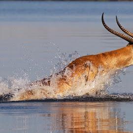 by John Mcloughlin Wildlife Photography - Animals Other Mammals ( john mcloughlin wildlife photographer,  )