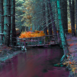 Elatia by Stratos Lales - City,  Street & Park  City Parks ( stream, red, cold, trees, colours )
