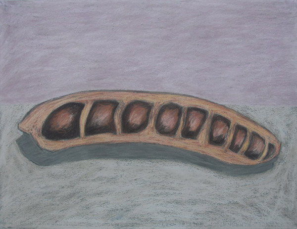 Seed Pod <br> Pastel on paper <br> 20 x 25.5 in