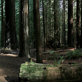 by Jay Fite - Landscapes Forests