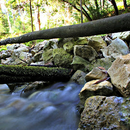 Stones in the river by Gil Reis - Nature Up Close Rock & Stone ( water, life, nature, forest, portugal, stones, rocks )