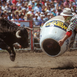 Rodeo Clown by Jim Downey - News & Events Entertainment ( excitement, danger, clown, rodeo, bull )