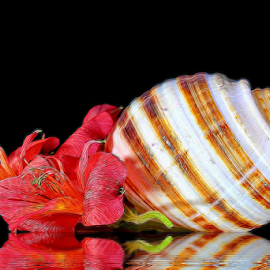 by Dipali S - Digital Art Things ( shell, reflection, nature, lily, flora, still life, artstic, flowers )
