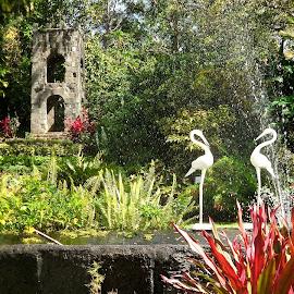 Serene by William Lanza - City,  Street & Park  City Parks ( water, paris, animals, colorful, serene, fountain, plants, meditation, architecture, flowers, garden, birds )