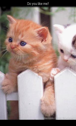 【免費書籍App】ipiks Love cats 2 Lite-APP點子