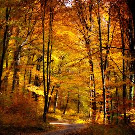 Őszi színek by Gruber Bálint Photography - Landscapes Forests