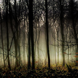 through the mist by Kathleen Devai - Landscapes Forests ( trees mist fog branches light )