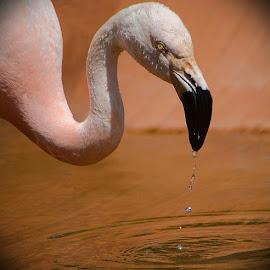 by Andrea Wright - Animals Birds (  )