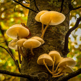 Fungis on a tree by Peter Samuelsson - Nature Up Close Mushrooms & Fungi