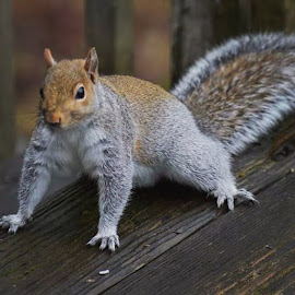 Stalky Squirrel  by Jim Griffis - Animals Other Mammals