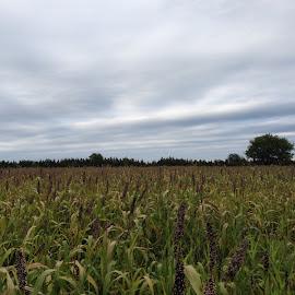 Nebraska skyline by Kristie Medbery - Nature Up Close Other plants