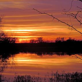Sunset Reflection by Jamie Hodge - Landscapes Sunsets & Sunrises ( nature, sunset, trees, pond, sun,  )