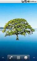 Screenshot of Oak Tree Spring Sticker