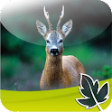 Roebuck Hunt icon