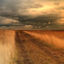 Light of My Soul by Odyssey Colorit - Landscapes Prairies, Meadows & Fields ( clouds, winter, way, sunshine, fields )
