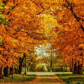 Autumn by Nenad Milic - City,  Street & Park  City Parks (  )