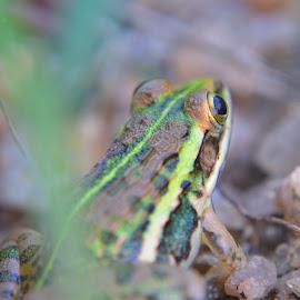 by Soumyakanti Pal - Animals Amphibians