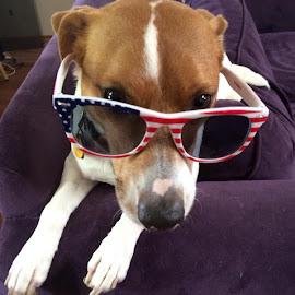 Ringo:  by Monique Walters - Animals - Dogs Portraits