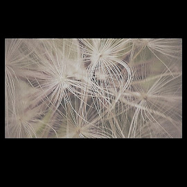 Make a wish by Krista McMullen - Nature Up Close Other plants