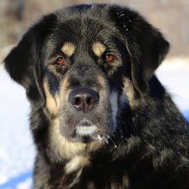 Dog by Teija Kukkonen - Animals - Dogs Portraits